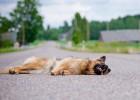 ペットをめぐる交通事故の実態